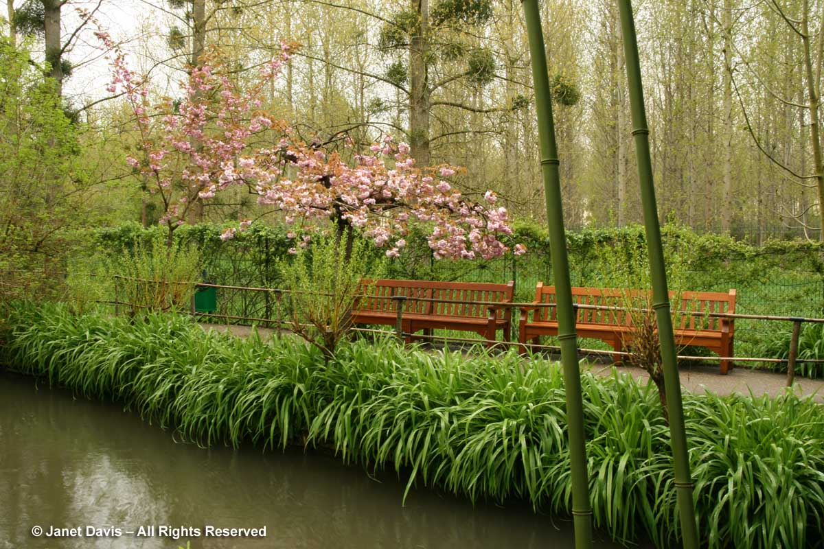 Giverny-Monet's Garden-Japanese bamboo & cherry