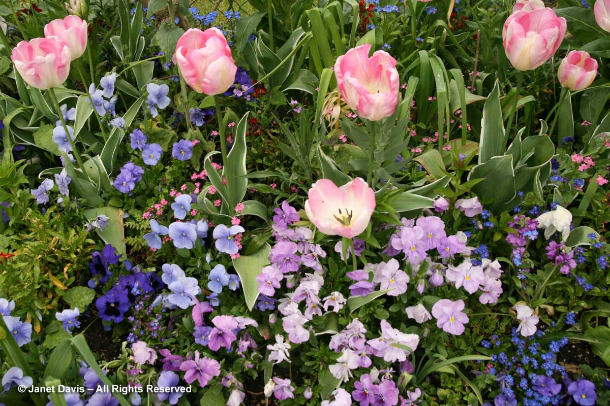 Giverny-Monet's Garden-Mauves & Purples-Spring
