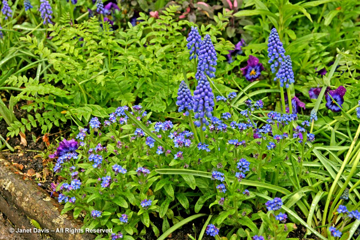 Giverny-Monet's Garden-blue spring flowers