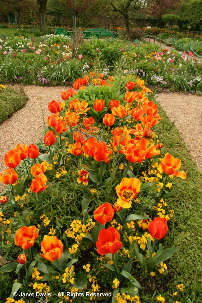 Giverny-Monet's Garden-orange & yellow spring flowers