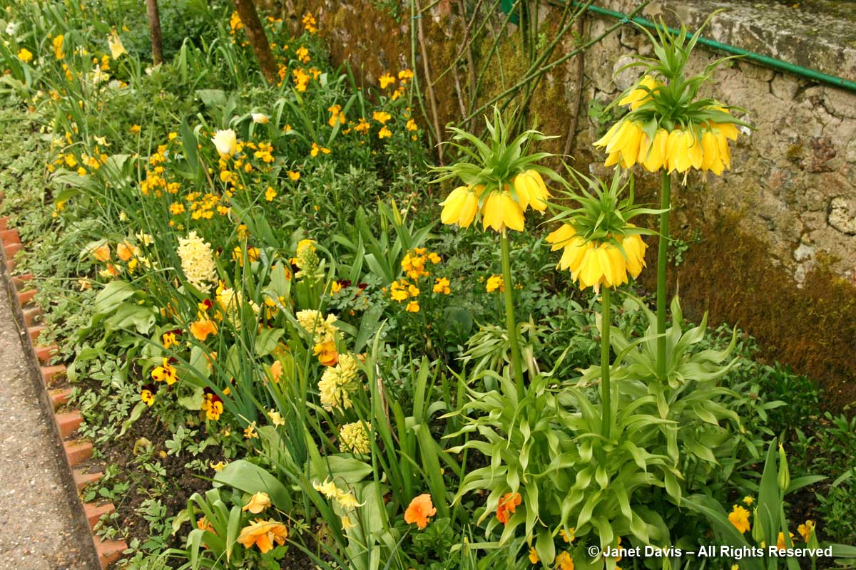 Giverny-Monet's Garden-yellow spring colour