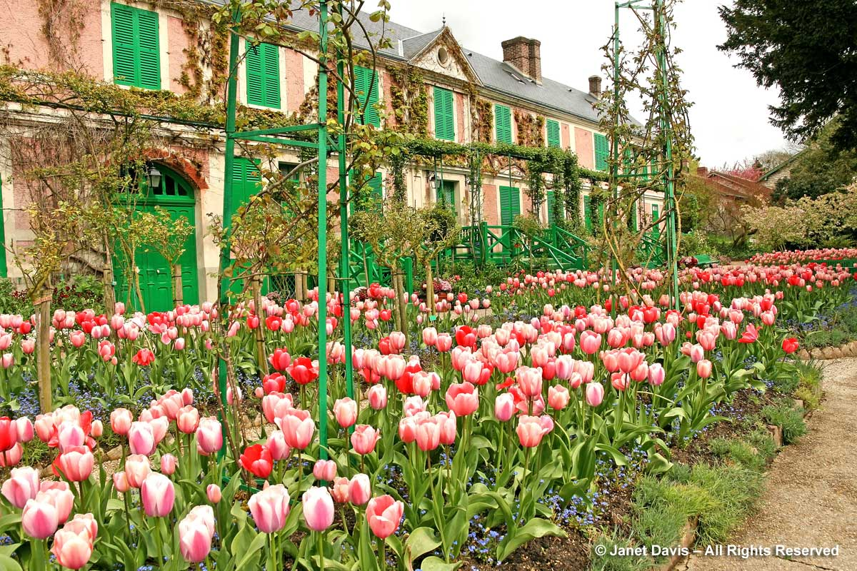 Giverny-Monet's house & pink tulip blend