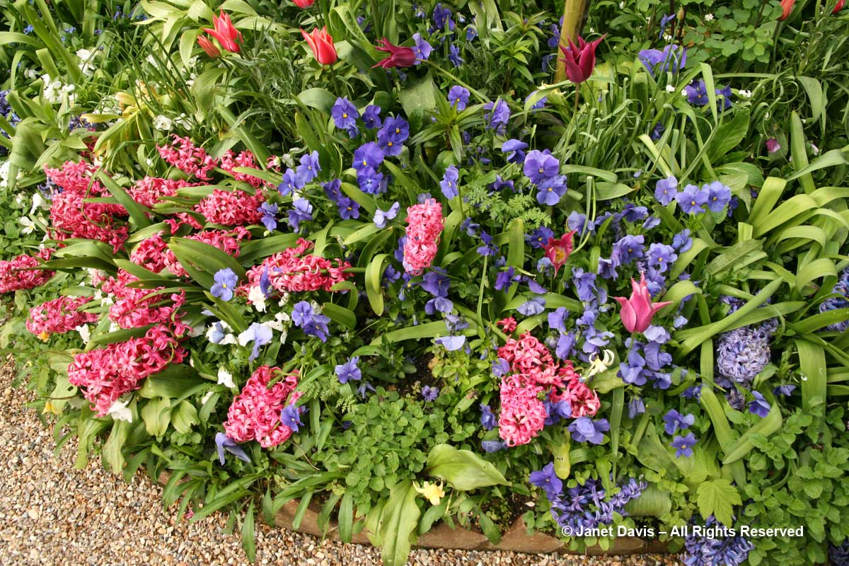 Hyacinths-Giverny-Monet's Garden-perfume
