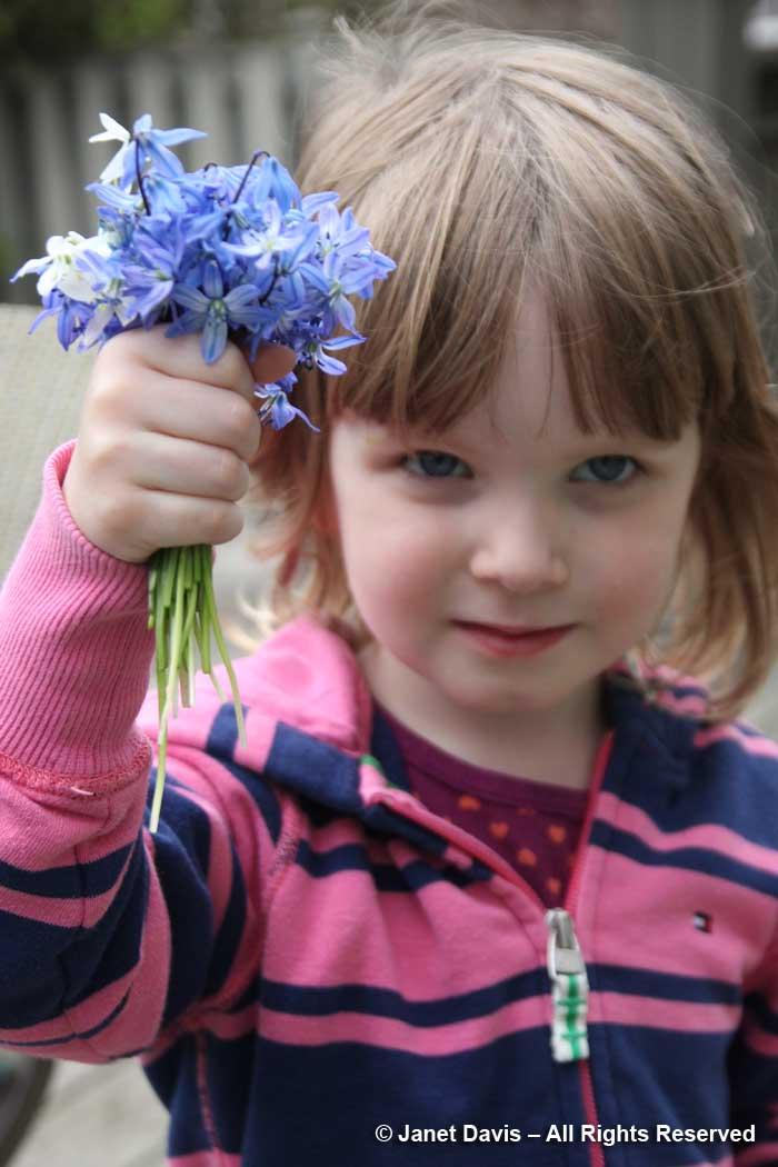 Scilla siberica bouquet