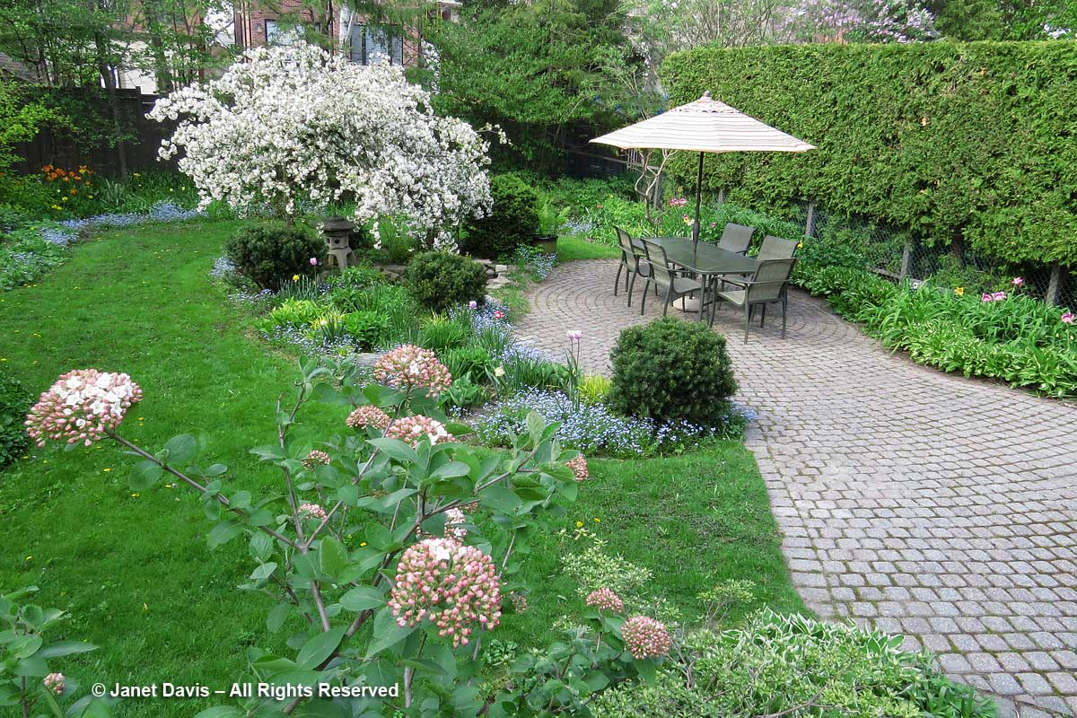 Back garden-Janet Davis-Toronto-Malus 'Red Jade'