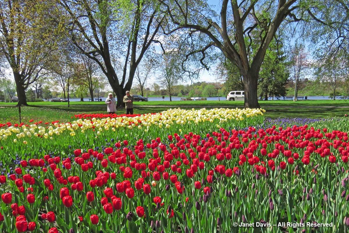 Commissioner's Park-Tulip Festival-Ottawa