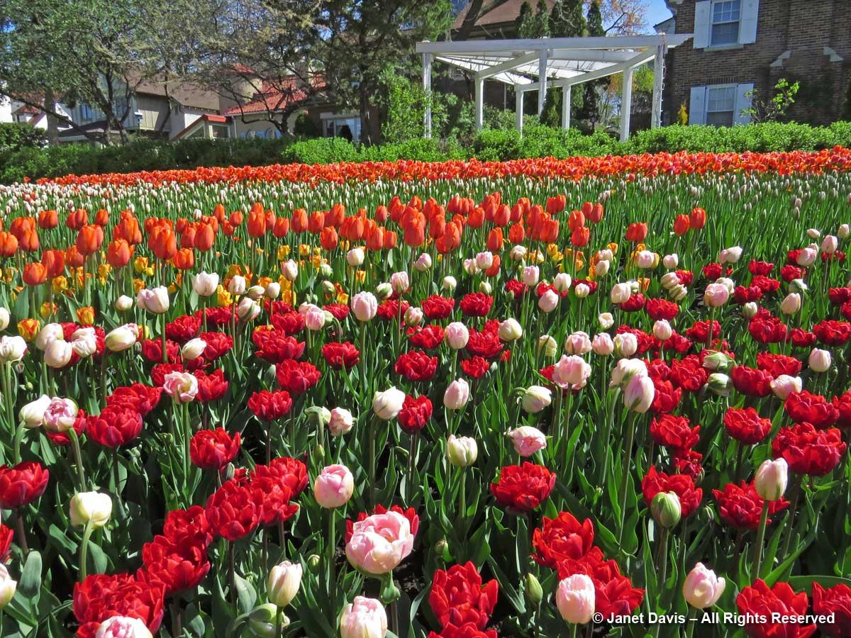 Commissioner's Park-houses-Tulip Festival-Ottawa