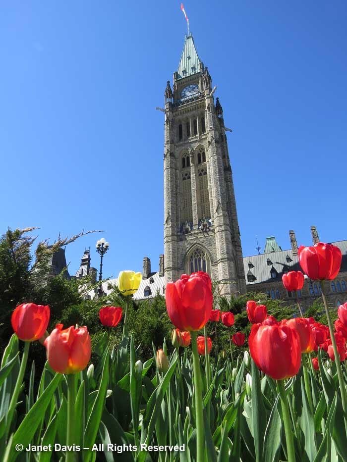 Parliament Buildings-Ottawa-Tulip Festival