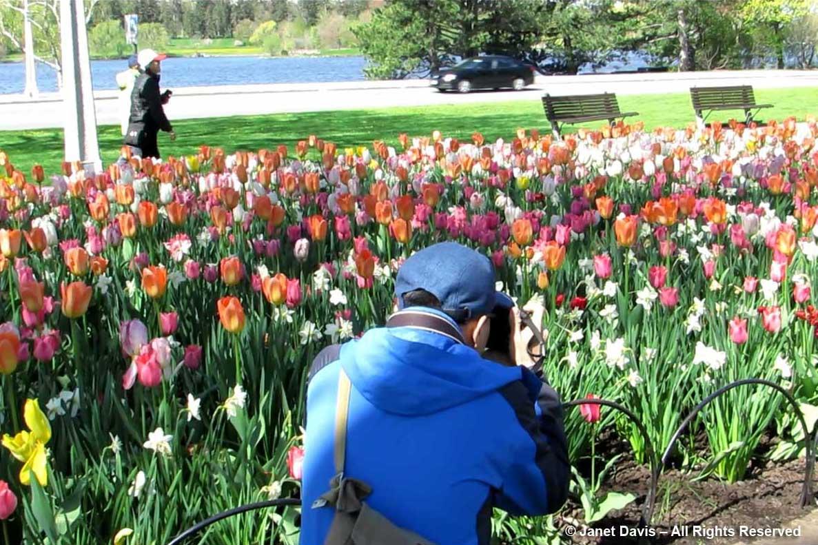 Photographer-Ottawa Tulip Festival-Commissiners Park2