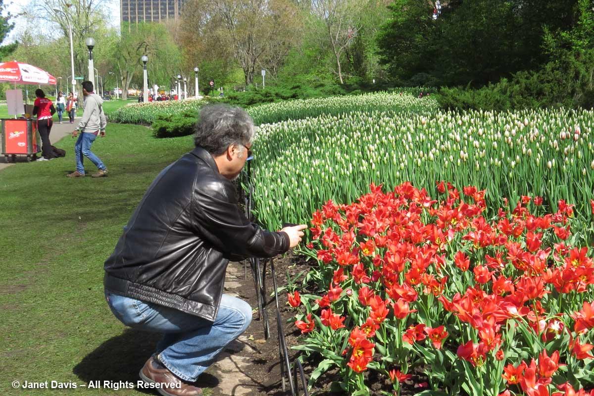 Photographer-Ottawa Tulip Festival-Commissioners Park1