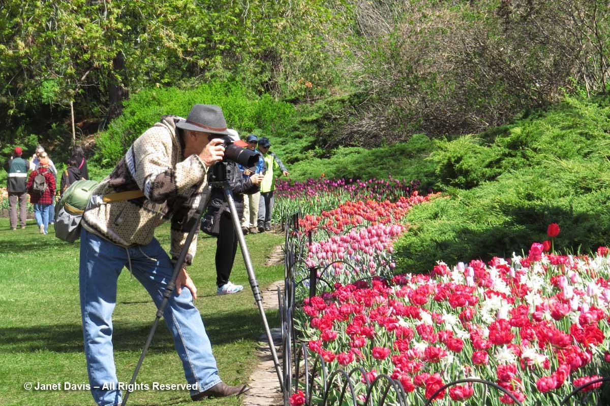 Photographer2-Ottawa-Tulip-