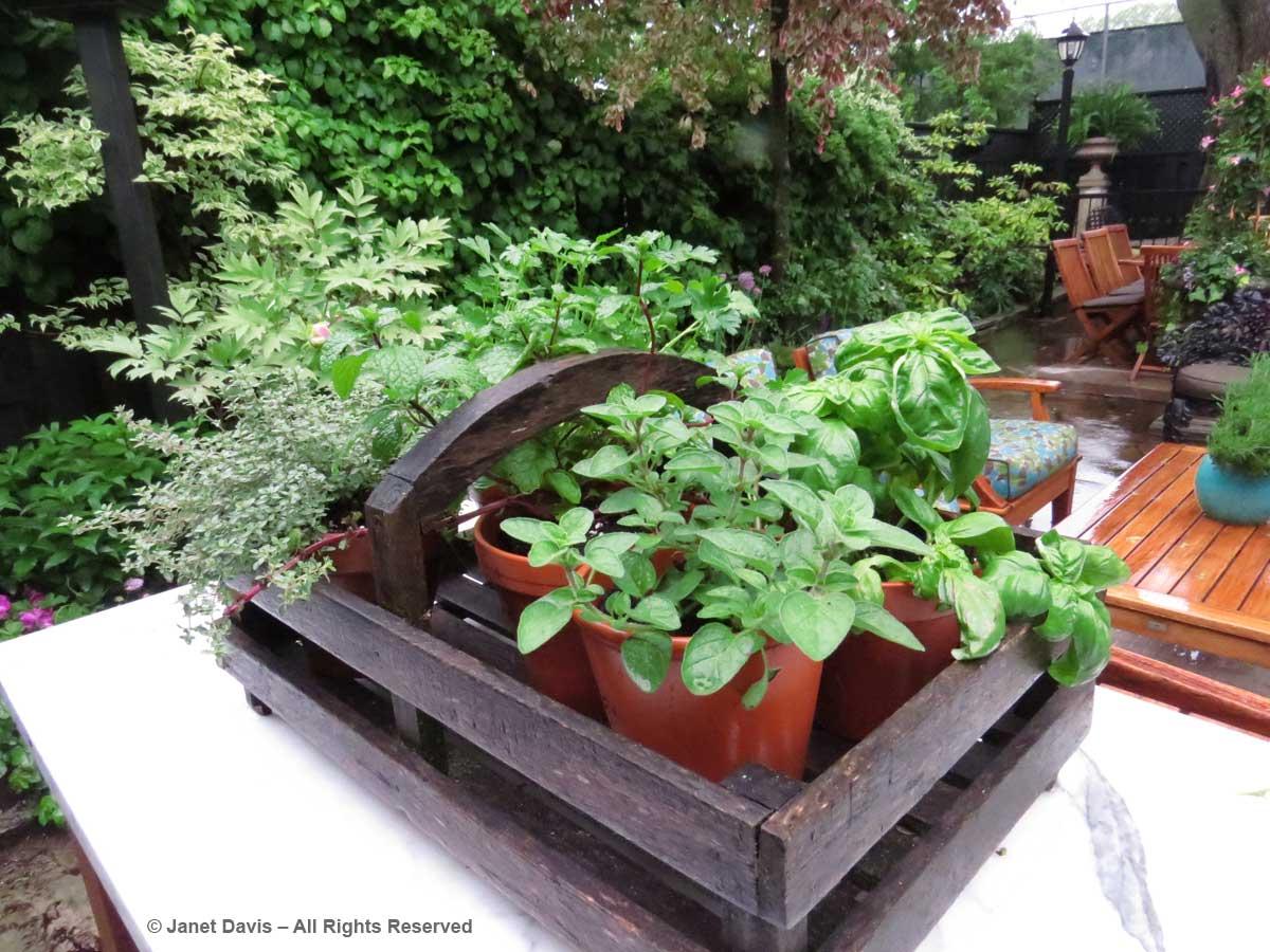 Toronto Botanical Garden-Through the Garden Gate-2017-Herb planter
