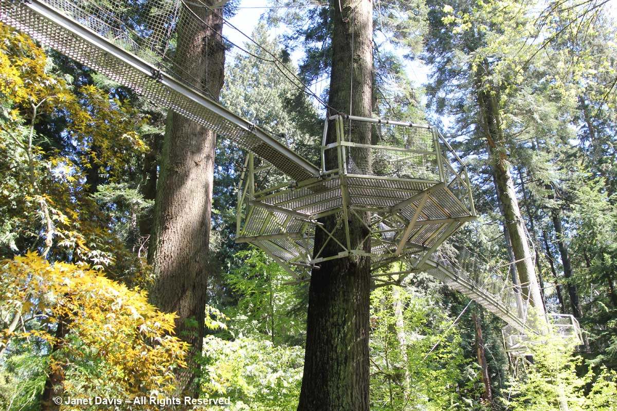 Tree Canopy Walk-David Lam Asian Garden-UBC Botanical