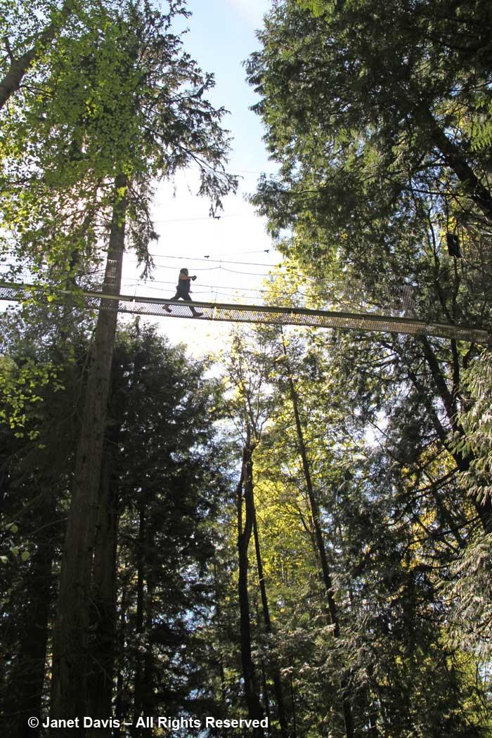 Tree-Canopy Walker-David Lam Asian Garden-UBC Botanical