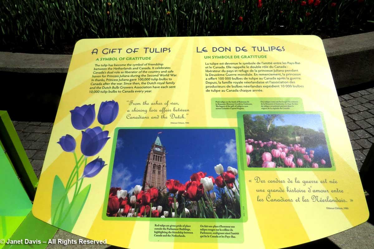 Tulip Festival-interpretive sign-Netherlands Gift.