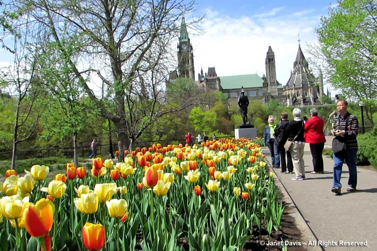 Tulips-Colonel By Monument-Ottawa-Tulip Festival