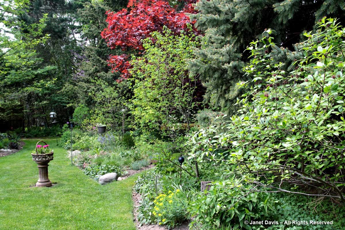 Back garden-Siri Luckow