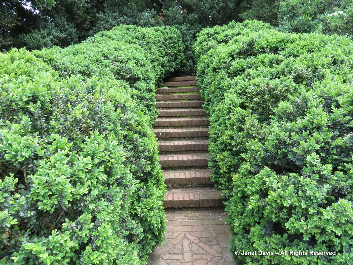 Boxwood hedges-Dumbarton Oaks
