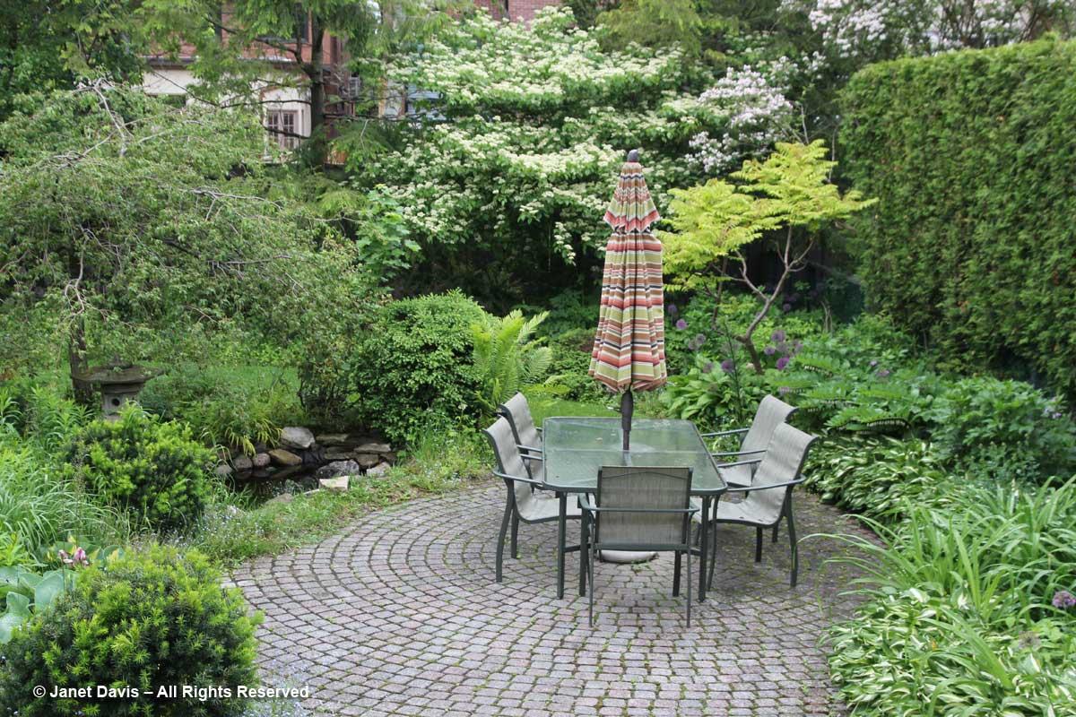 Cornus alternifolia-Pagoda dogwood-with Kolkwitzia-Janet Davis garden