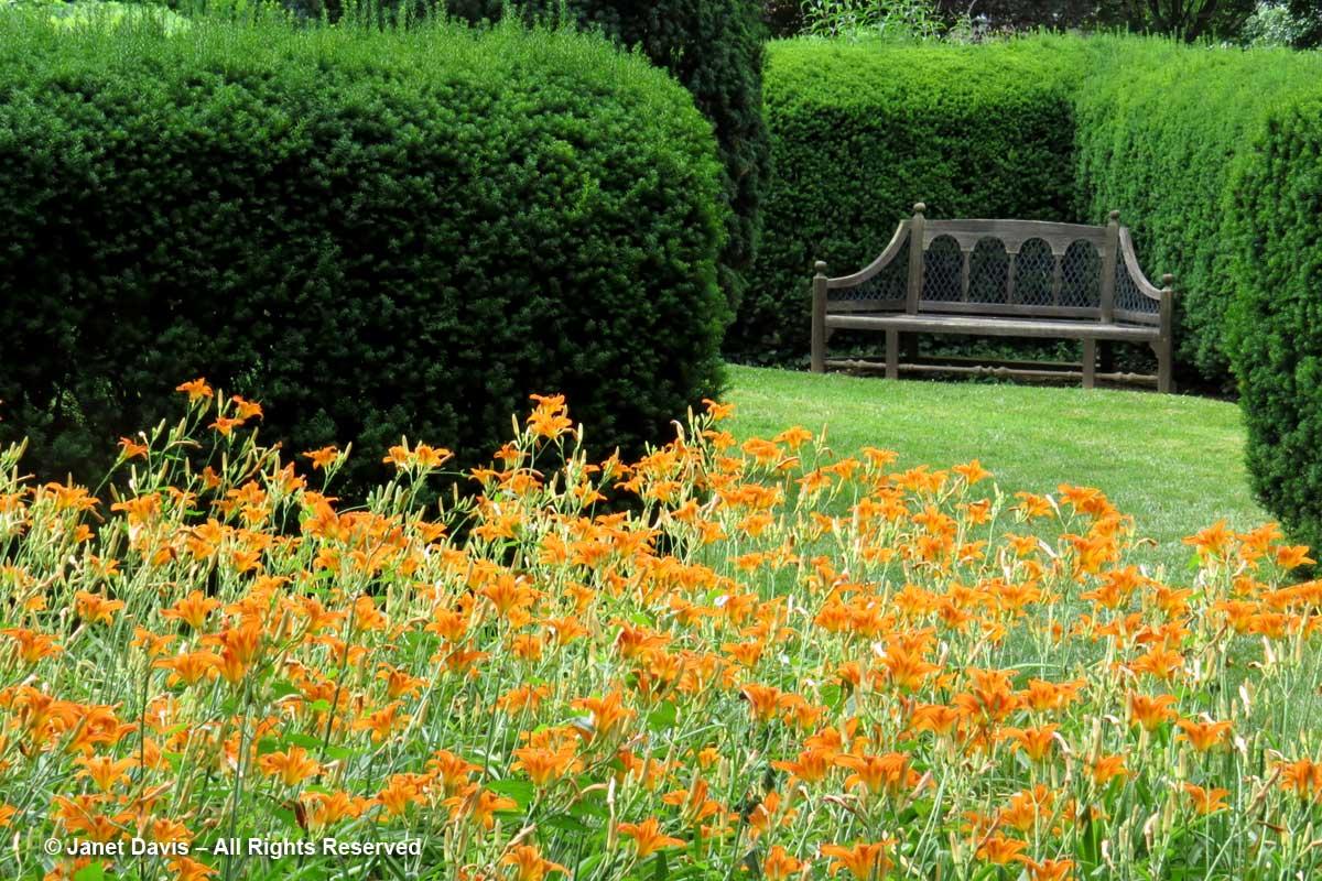 Daylilies-Herbaceous Garden-Dumbarton Oaks