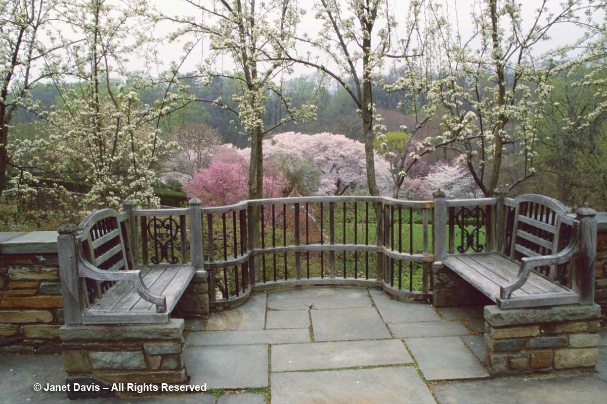 Dumbarton-Oaks-Aerial hedge-Pear trees-Cherry Hill