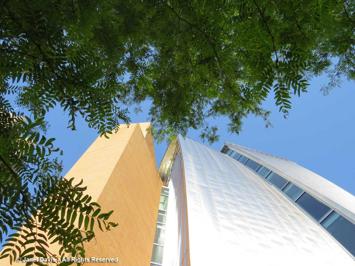 Gleditsia-Honey locust-Lewis Science Library-Frank Gehry Design-Princeton