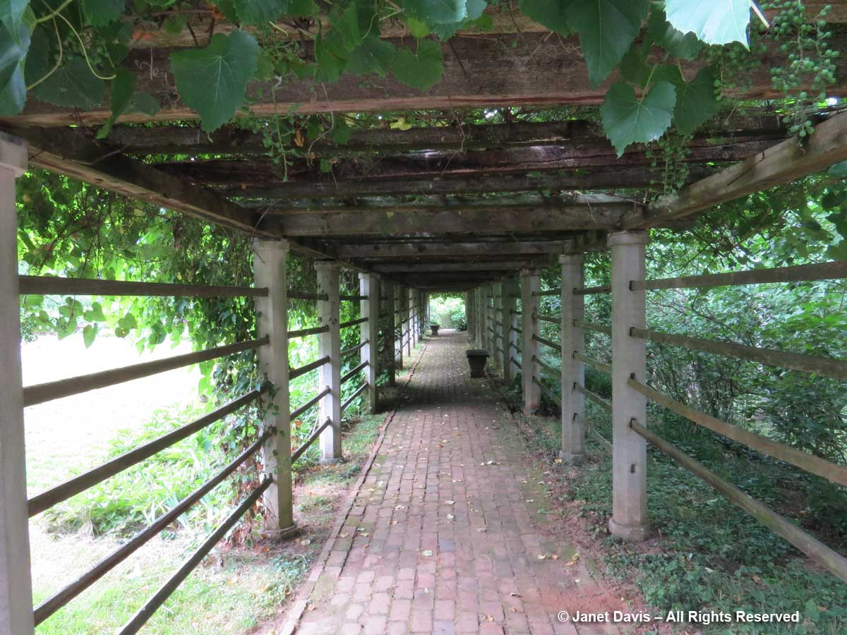 Grape Arbor-Dumbarton Oaks
