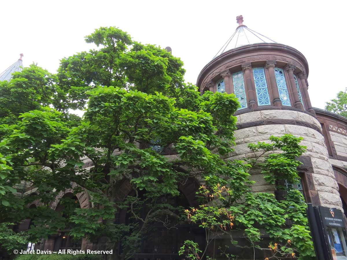 Magnolia-Alexander Hall-Princeton