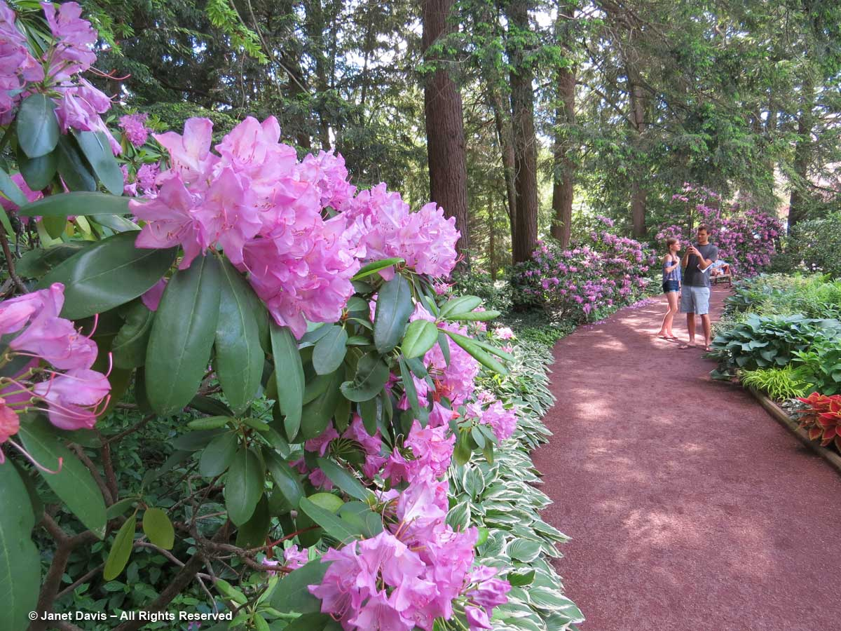 Prospect House Garden-Rhododendrons-Princeton