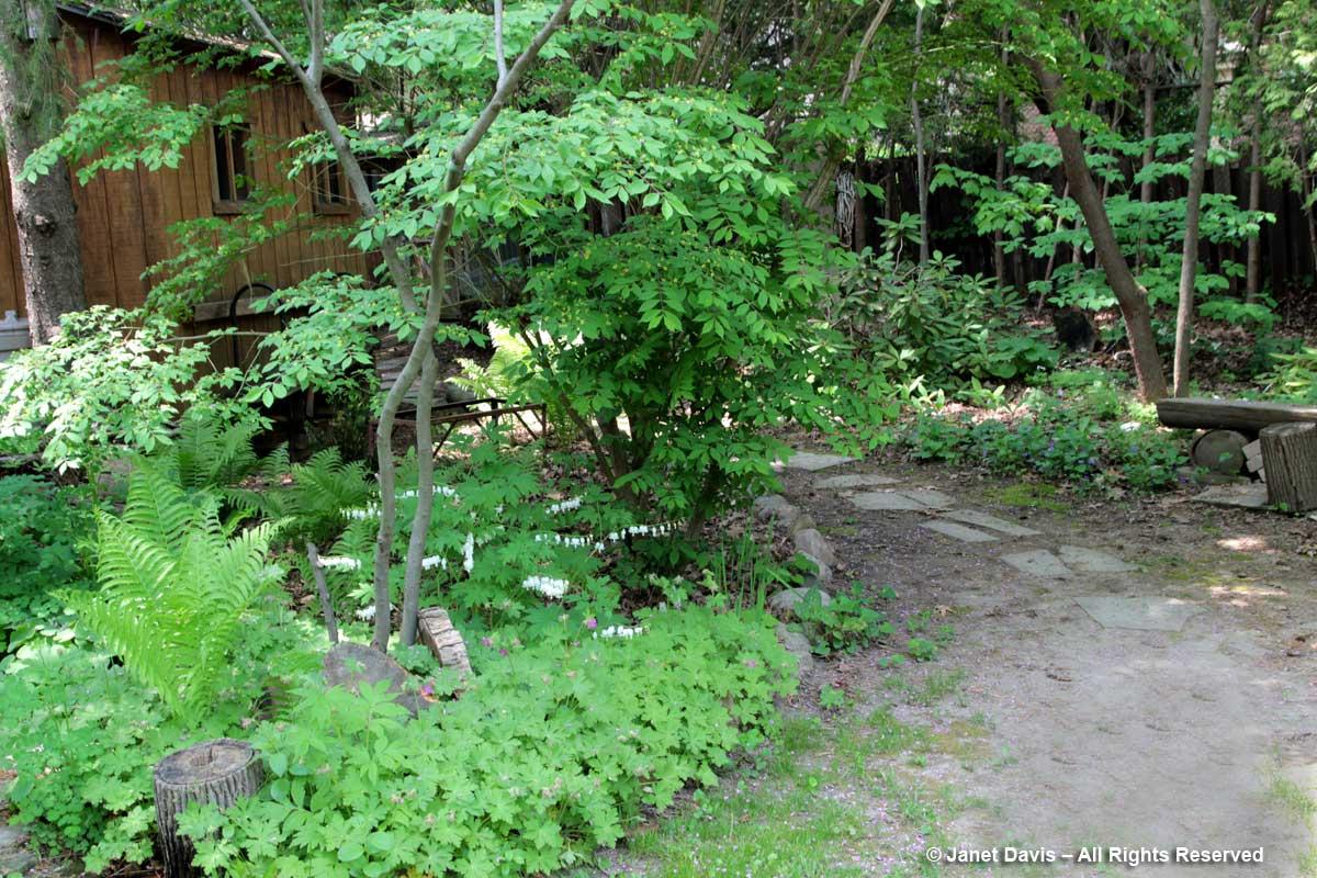Shady garden-Siri Luckow