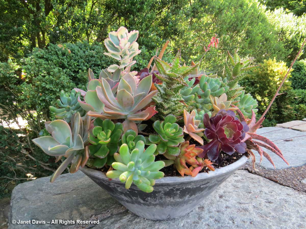 Succulents-Kitchen Garden-Dumbarton Oaks