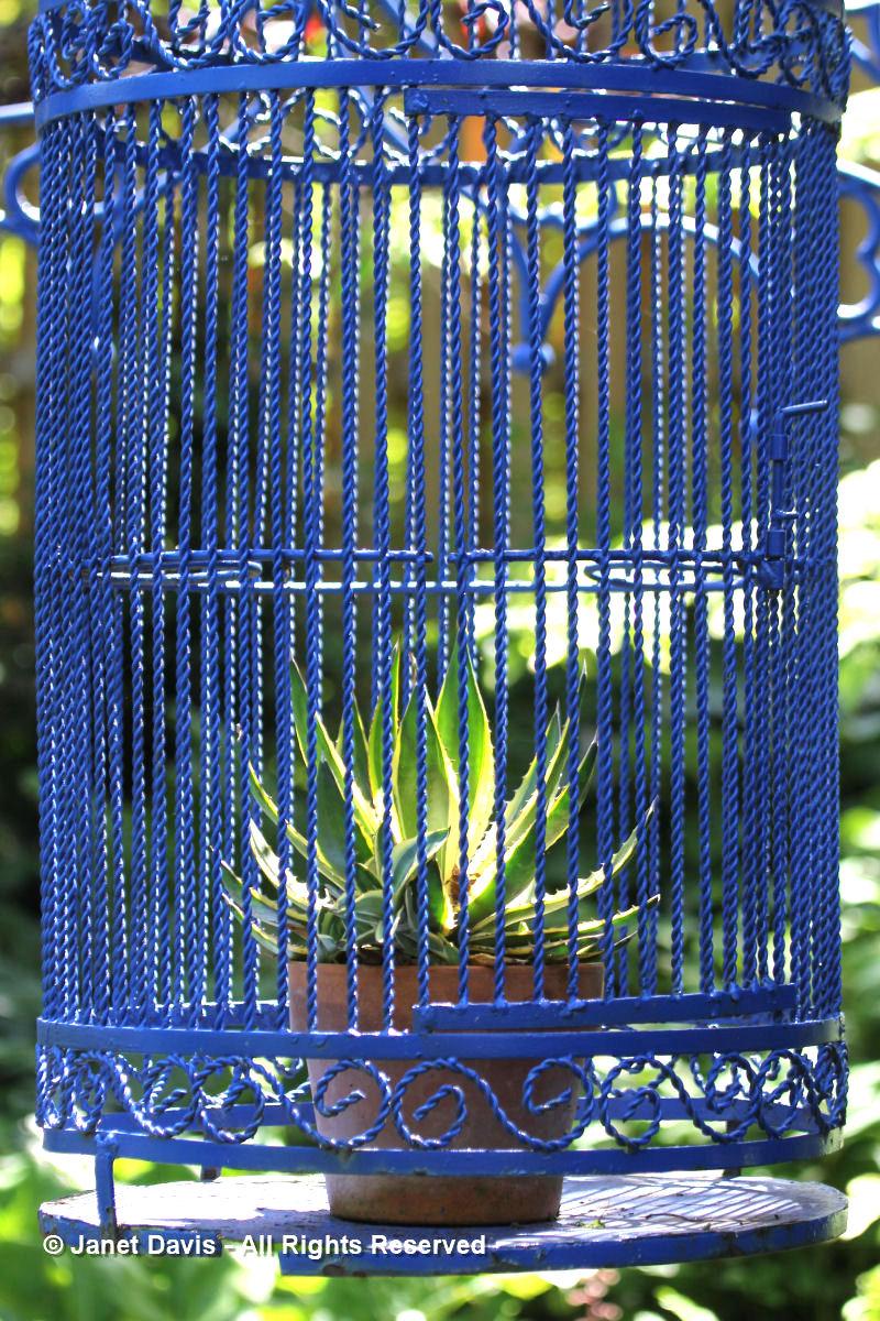 Agave in birdcage-Linda Hostetler