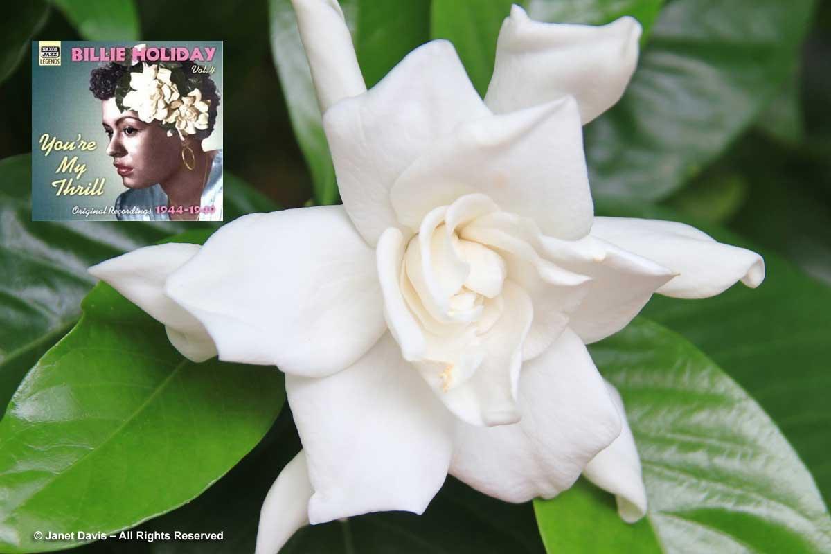 Billie Holiday-Gardenia-Janet Davis