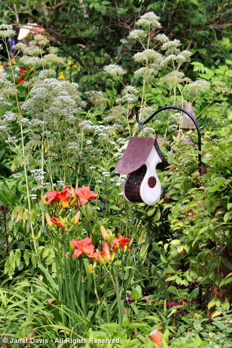 Birdhouse & daylily-Tammy Schmitt