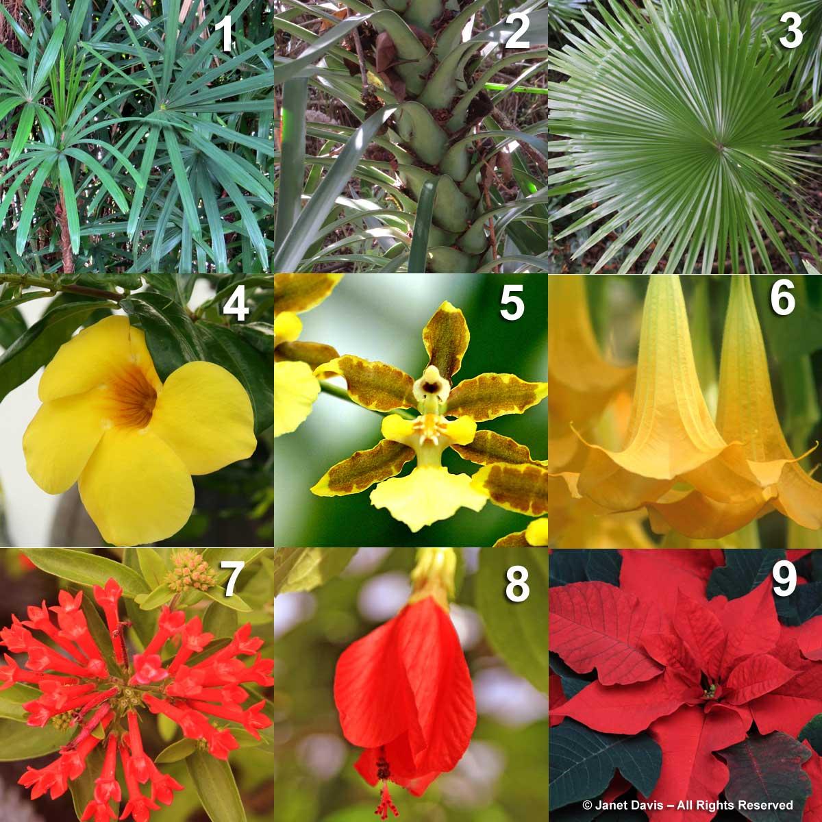 """ BOB MARLEY"" - RBBALEOMY 3. Bouvardia ternifolia 7. Oncidium goldiana 2. Brugmansia aurea 8. Malvaviscus arboreus 4. Allamanda cathartica 1. Rhapis excelsa 5. Licuala spinosa 6. Euphorbia pulcherrima 9. Yucca aloifolia"