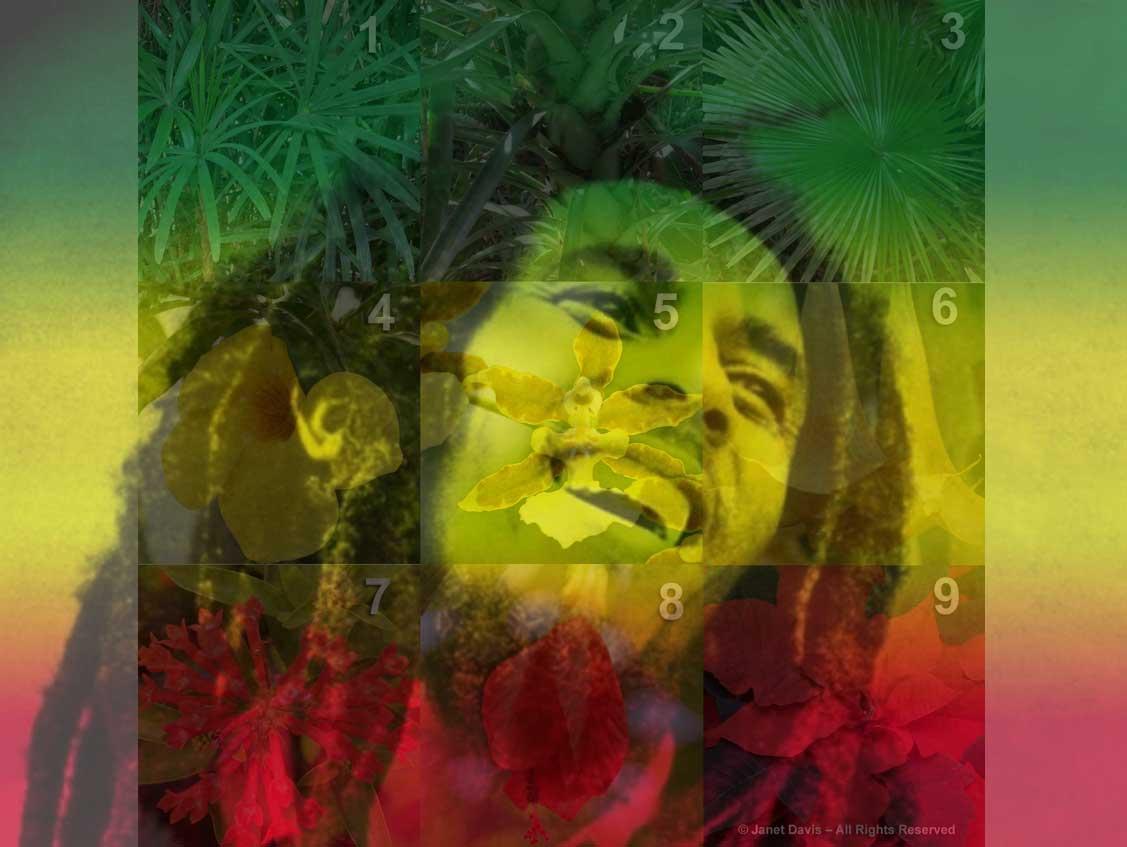Bob Marley-Rasta plants