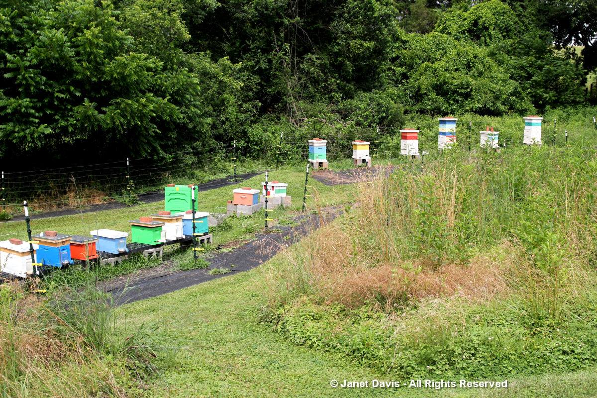 Center for Historic Plants-Monticello-Bee Hives
