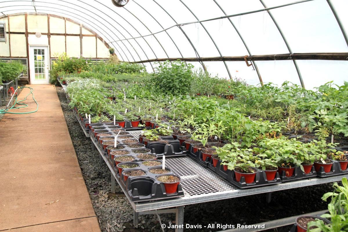Center for Historic Plants-Monticello-Greenhouse