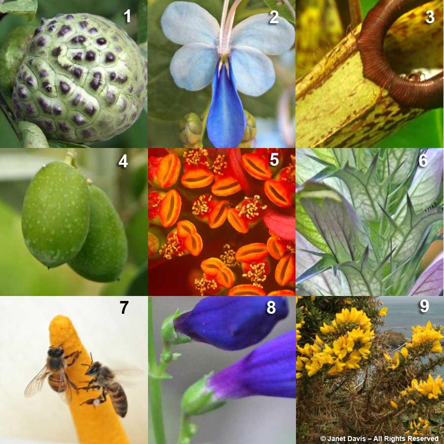 """EZRA POUND"" - DRNOEAZPU 5-Euphorbia pulcherrima 'Maren' 2- Rotheca myricoides 7 - Z - Zantedeschia aethiopica 6 - A - Acanthus hungaricus 8 - P - Penstemon barbatus 'Rondo' 4 - O - Olea europea 9 - U - Ulex europaeus 3 - N - Nepenthes sp. 1 - D - Datura metel"