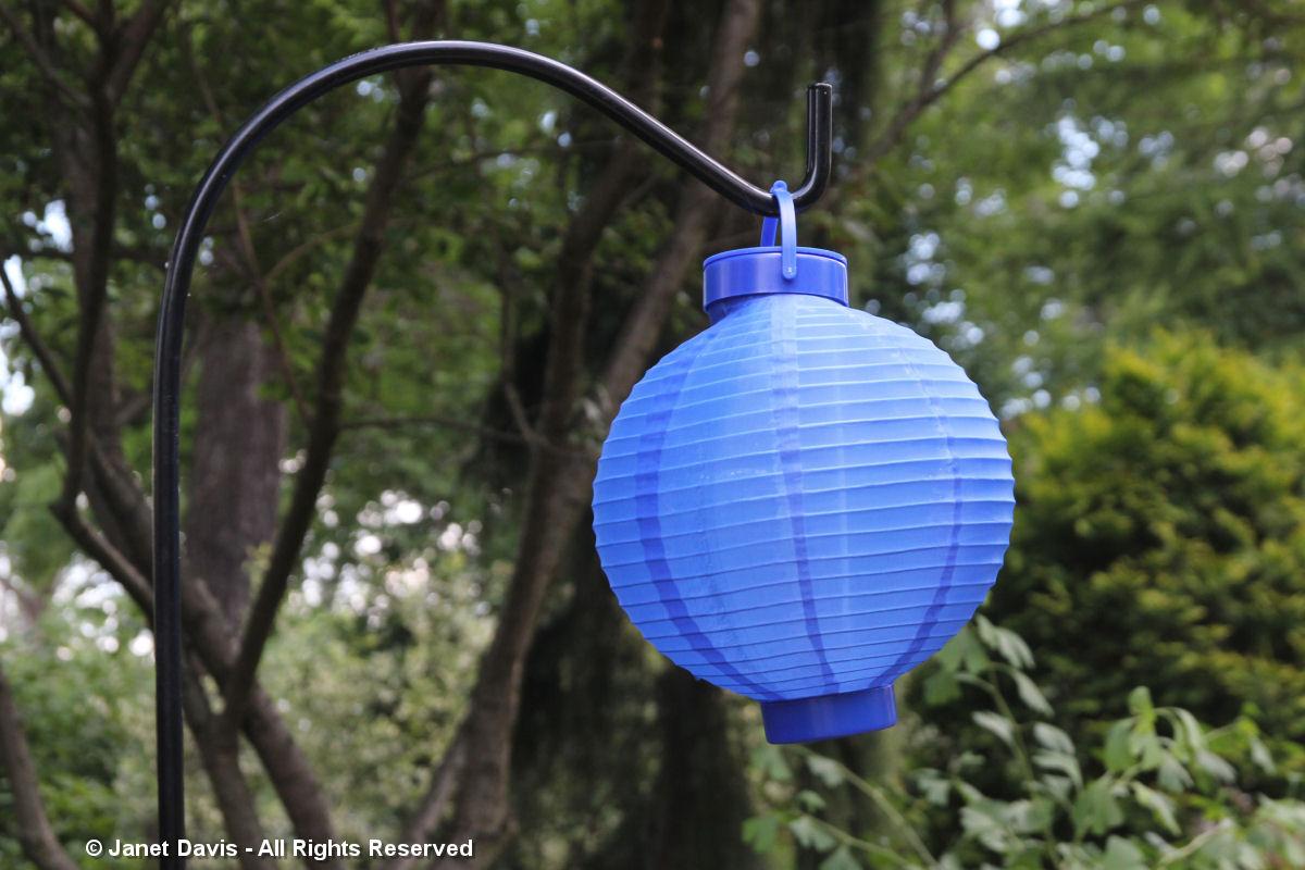 Japanese lantern-Linda Hostetler