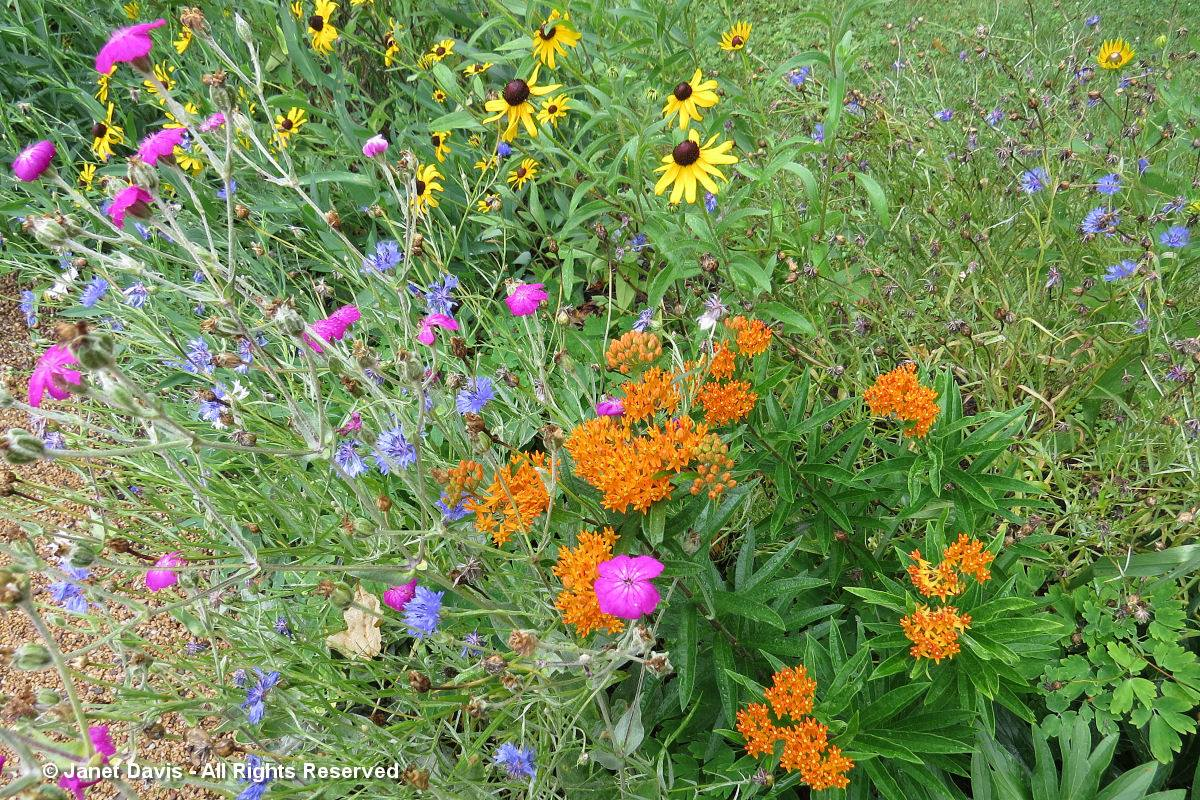 Mixed flowers-Monticello