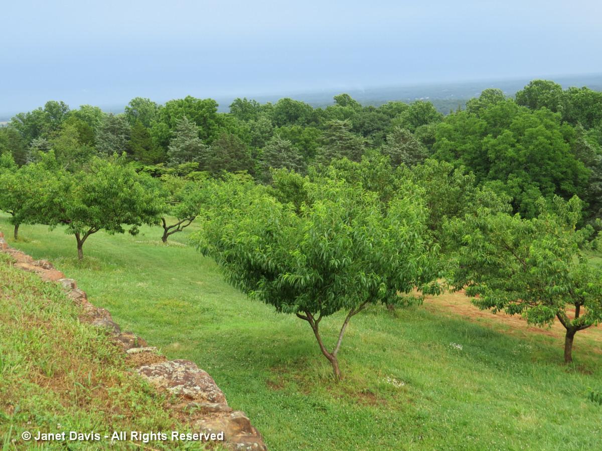 Monticello Orchard