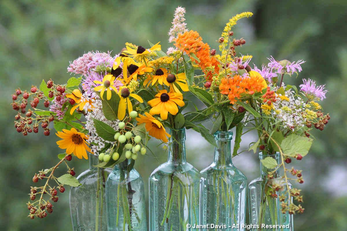 August meadow flowers