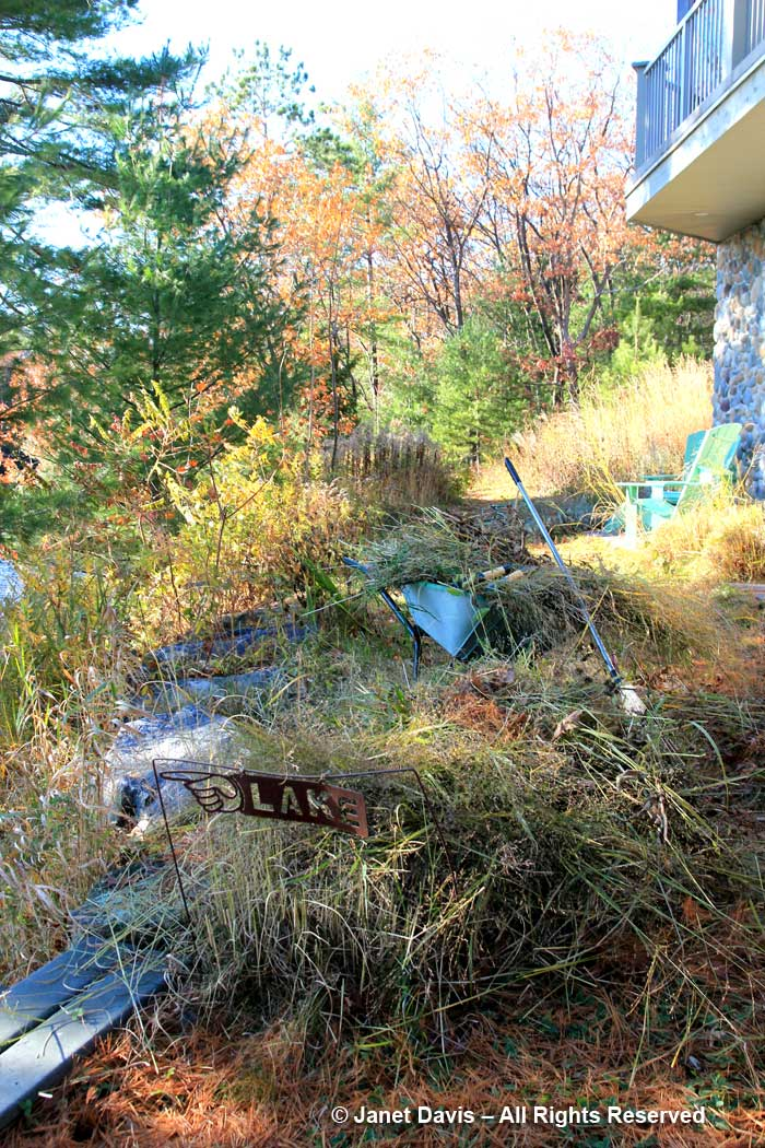 Autumn cleanup-Lake Muskoka-meadow grasses