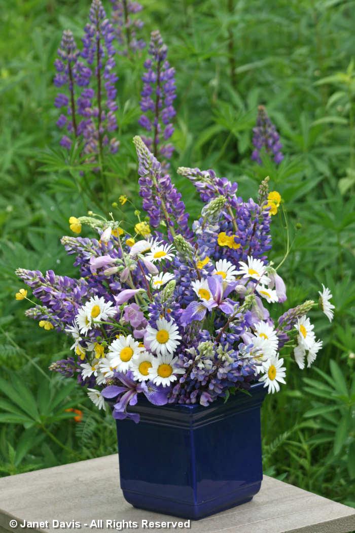 Bouquet-Lupines-June-Lake Muskoka