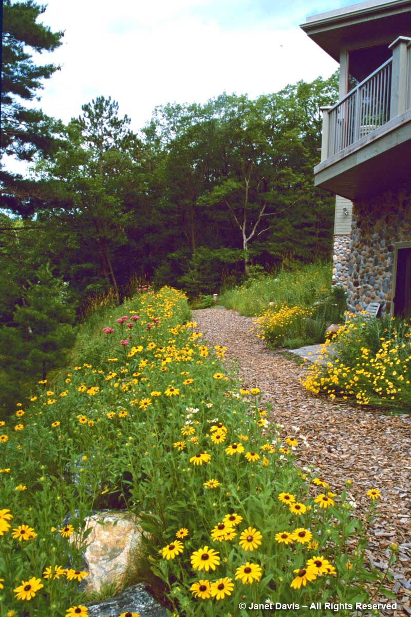 Lake Muskoka Cottage-Blackeyed Susans-2003