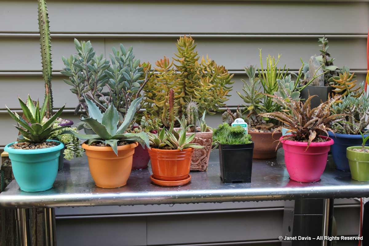 Succulent collection-Howard Katz