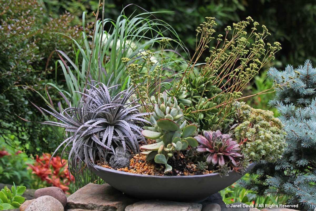 Succulents-Howard Katz-1