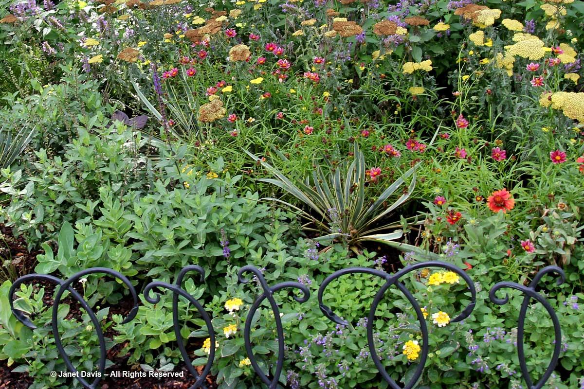 Sun-loving plants-Barbara Katz