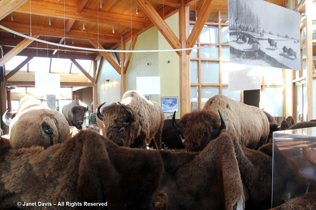 Bison-Wanuskewin Visitors Centre